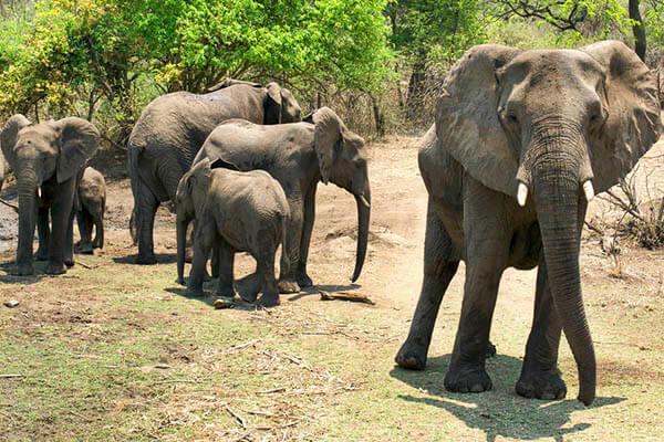 elephants-lifespan