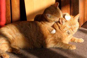 Cats lifespan
