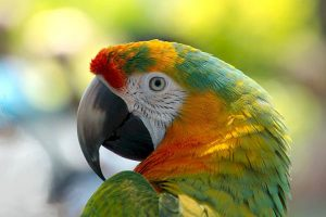 How long do parrots live?
