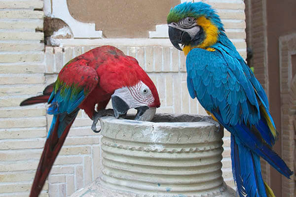 ▷ HOW LONG DO PARROTS LIVE? | FACTS and HABITAT | How Long
