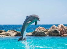How long do dolphins live?