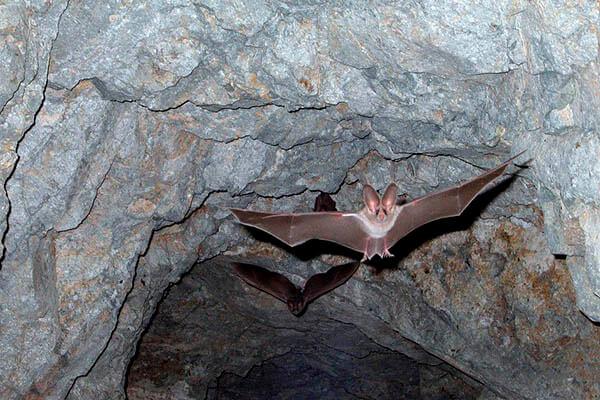Bats lifespan