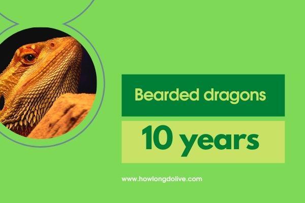 How long do bearded dragons live?